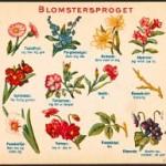 Création de langagedesfleurs.org le site sur le langage des fleurs