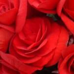 Quelles fleurs pour la Saint Valentin ?
