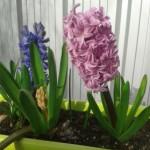 Les fleurs du printemps sont là !