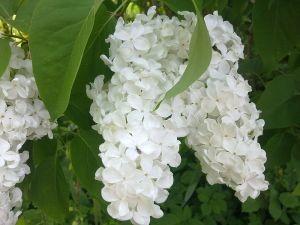 Langage Des Fleurs Signification Et Explication