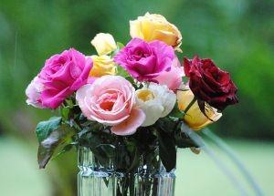 signification de la rose blanche dans le langage des fleurs