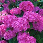 Profitez de l'été, profitez du langage des fleurs !
